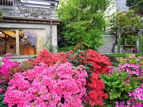 Picture of Lake Como apartment Ivan_Vercana_20_Garten